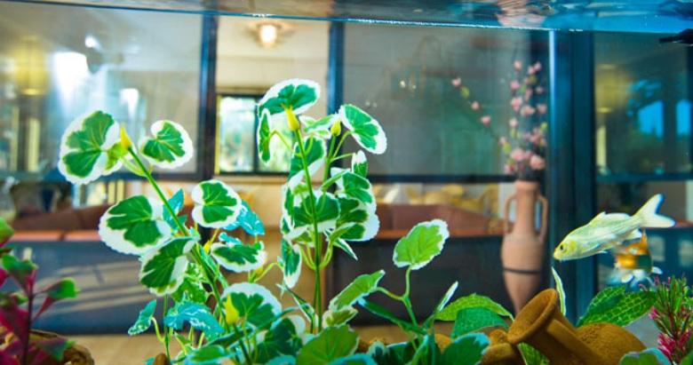Pianta con acquario nella Hall dell'Hotel